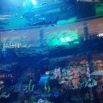 Dubai – akwarium