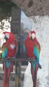 Rodos – papugi